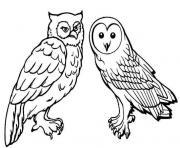 chouette et hibou oiseau de meme famille dessin à colorier