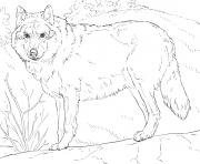loup gris realiste par supercoloring dessin à colorier