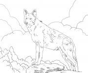 loup rouge amerique du nord dessin à colorier