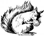 ecureuil deguste une noisette dessin à colorier