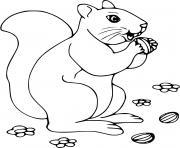 ecureuil adore les noisettes dessin à colorier