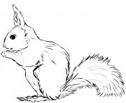 ecureuil realiste petit animal dessin à colorier