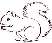ecureuil realiste dessin à colorier
