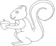 ecureuil roux americain dessin à colorier