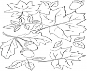 automne feuilles and acorns fall dessin à colorier