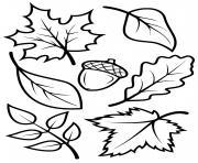 feuilles automne arbres erable hetre chene dessin à colorier