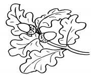 branche arbre chene feuilles autonme dessin à colorier