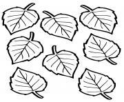 feuilles autonme arbre hetre dessin à colorier