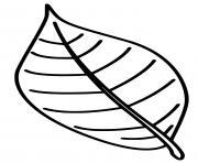 feuille hetre facile dessin à colorier