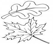 feuilles arbre erable chene dessin à colorier