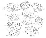 les feuilles changent de couleur en automne dessin à colorier