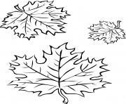 trois feuilles automne dessin à colorier