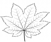 feuille erable de vigne dessin à colorier