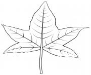 feuille de prunier dessin à colorier