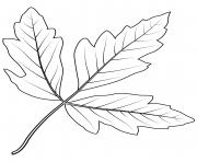 feuille erable en ecorce dessin à colorier