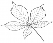 feuille de marronnier indien dessin à colorier