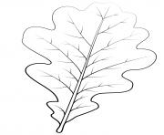 feuille de chene anglais dessin à colorier