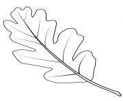 feuille de chene de la vallee dessin à colorier
