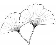 feuille acacia dessin à colorier