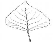 feuille de peuplier faux tremble dessin à colorier