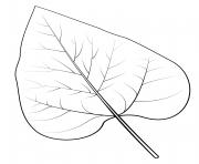 feuille de catalpa nothern dessin à colorier