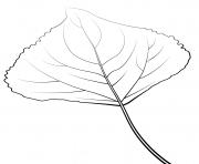 feuille de peuplier lombard dessin à colorier