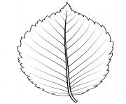 feuille orme Amerique dessin à colorier