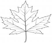 feuille erable argentee dessin à colorier