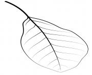 feuille tupelo noir dessin à colorier