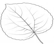 feuille arbre katsura dessin à colorier