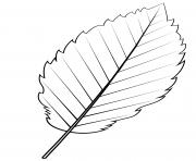 feuille aulne rouge dessin à colorier