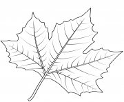 feuille de platane de londres dessin à colorier