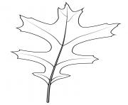 feuille de chene a broches dessin à colorier
