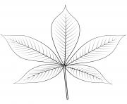 feuille de buckeye de ohio dessin à colorier