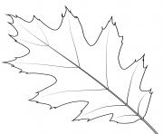 feuille de chene rouge du nord dessin à colorier