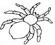 real araignee dessin à colorier